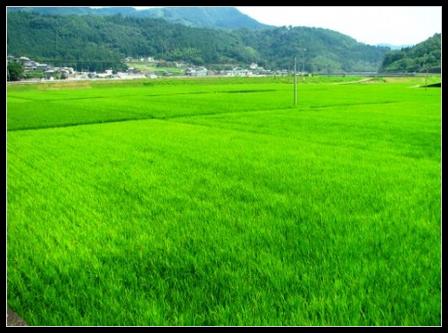 農地法3条許可 - 愛知県岡崎市の...
